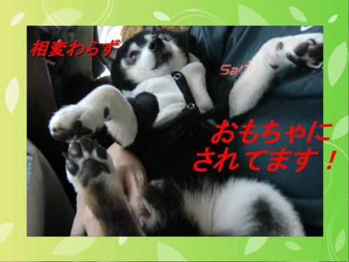 蜴ウ_convert_20101123061739[1]
