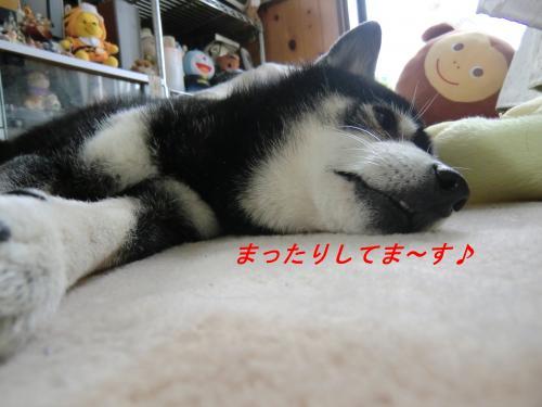 蟇昴※縺セ縺兩convert_20101124071220[1]