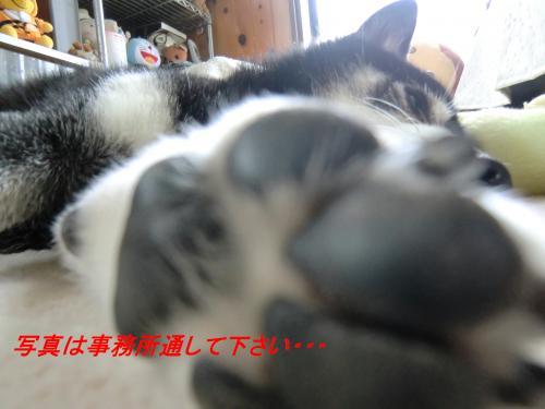 閧臥帥_convert_20101124072016[1]