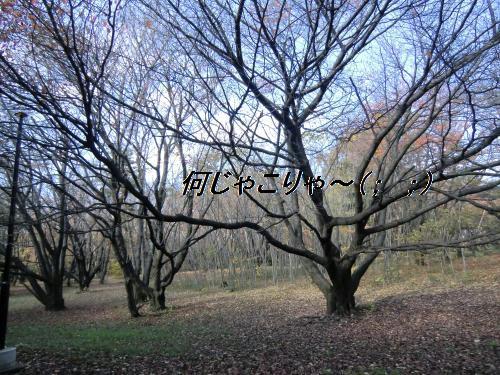 2010_1127_130227-CIMG2381_convert_20101201195922[1]