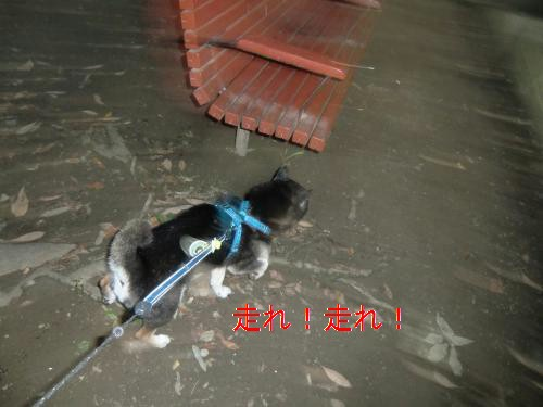 2011_0831_180733-CIMG4759_convert_20110831195114[1]