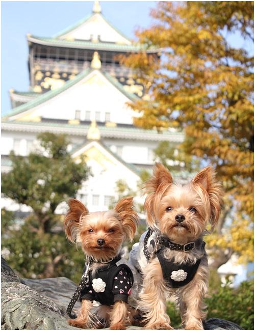 大阪城とクルココ