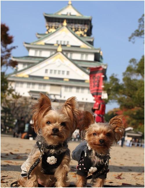大阪城とクルココ2
