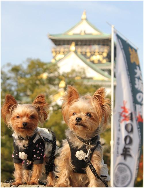 大阪城とクルココ3