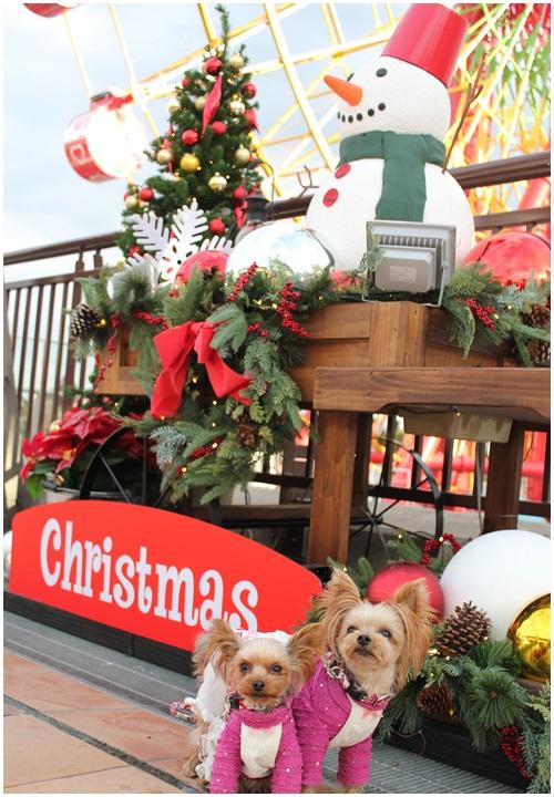 クリスマスツリーとクルココ