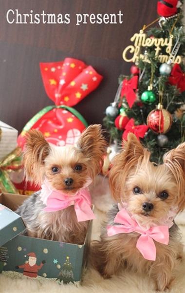 レッスン3回目 宿題③クリスマスプレゼント