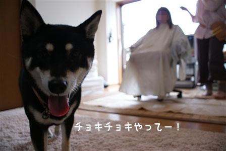 kurumi_20110528113048.jpg