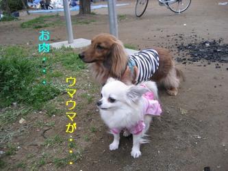 くるみ&チャッピーちゃん