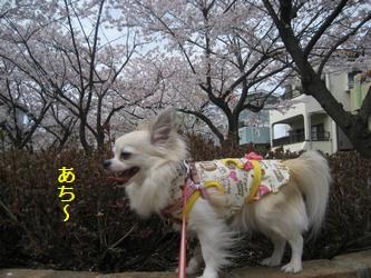 くるみと桜-3