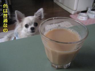 ミルクセーキ1