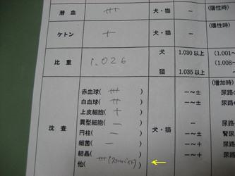 検査結果2