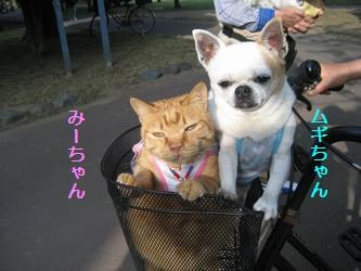 みーちゃん&ムギちゃん