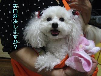 ぷーちゃん2