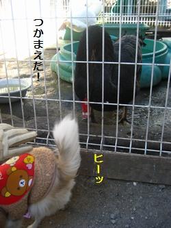 鳥さんと6