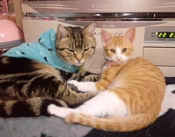 子猫れもんちゃんとひでじい2