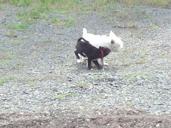 犬のやまこ2