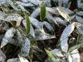 仁伏、初積雪