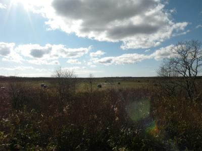 別海町の牧草地