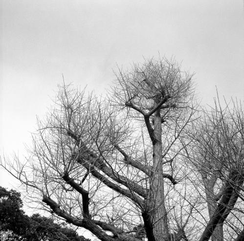 称名寺 ikonta 枝