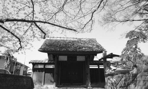 称名寺 桜5