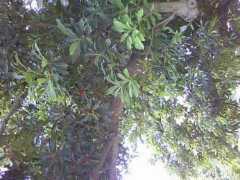 image_20130624095336.jpg