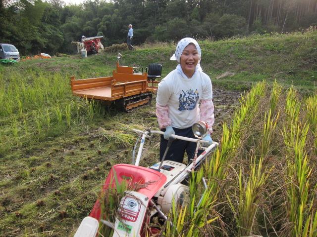 岡本家にて稲刈り