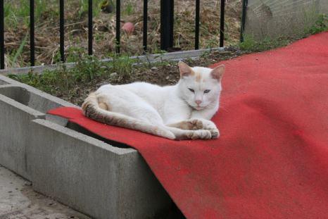 IMG_9483猫6