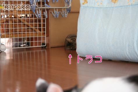IMG_0296きじ6