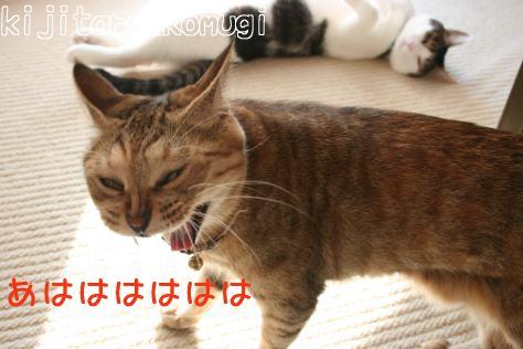 IMG_0681コムギ5