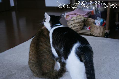 IMG_0840コムギ5