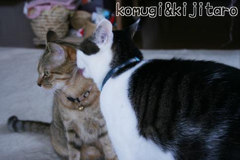 IMG_0836コムギ2