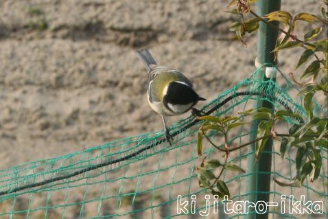IMG_1278鳥5