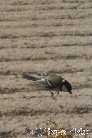 IMG_1276鳥4