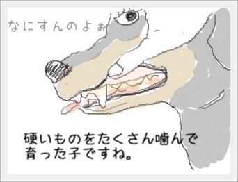 kataimomo1.jpg