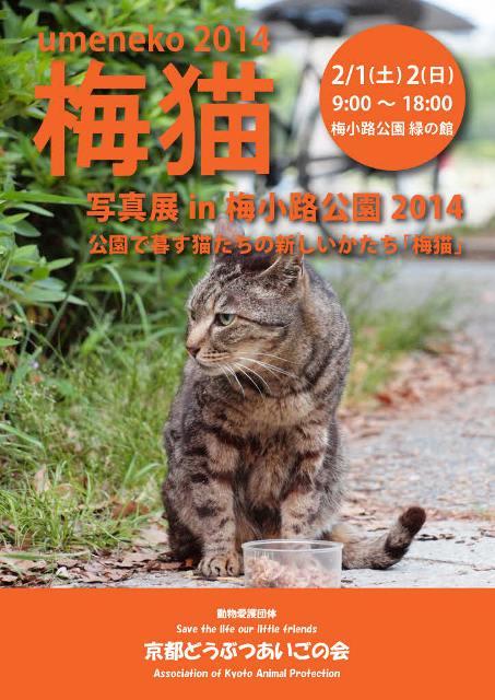 梅猫201405_page001