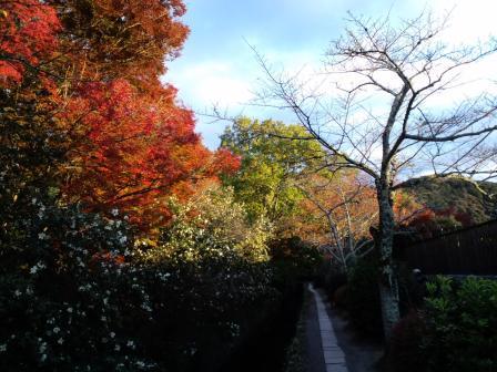 哲学の道  11月 24日