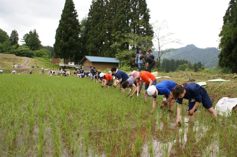 みんな一列に並んで草取りをします