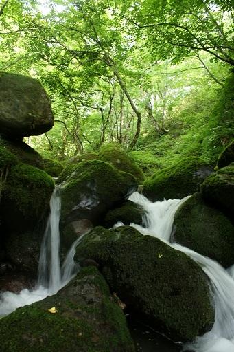 小ヶ崎水源にて。