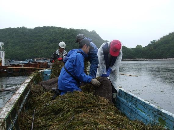 採った種は袋に詰めて、海にぶら下げます