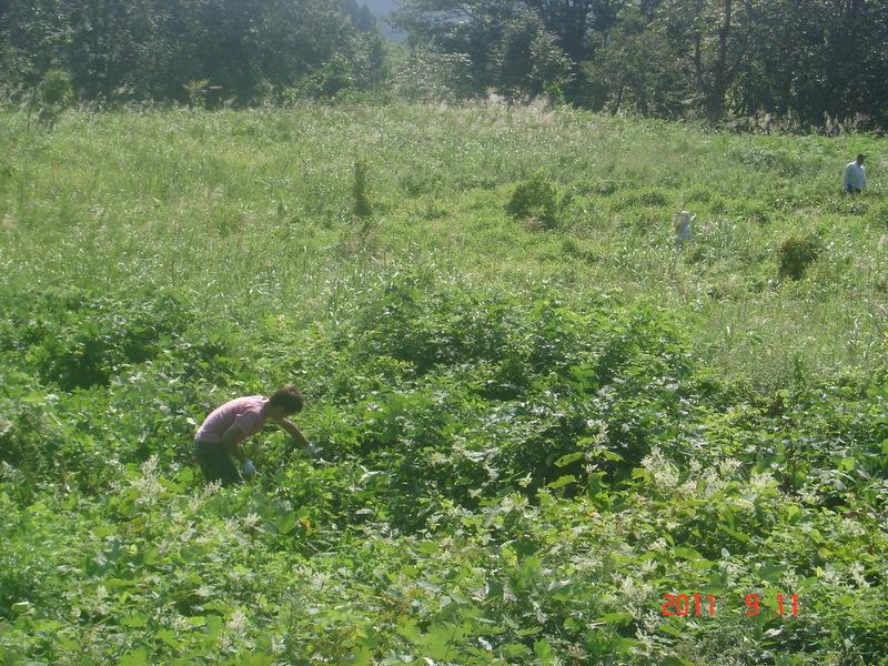 生い茂った雑草の中をかき分けて、作業を進めます