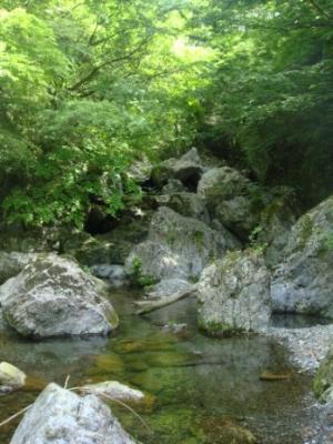 水源地の森
