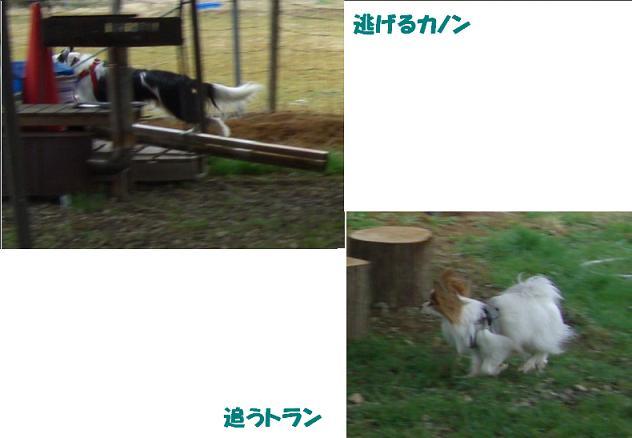 CIMG9501c.jpg
