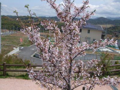 10.04.09桜