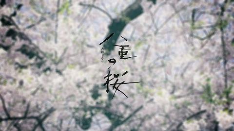yaenosakura0107.jpg