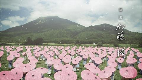 yaenosakura0112.jpg