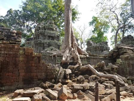 遺跡と巨木