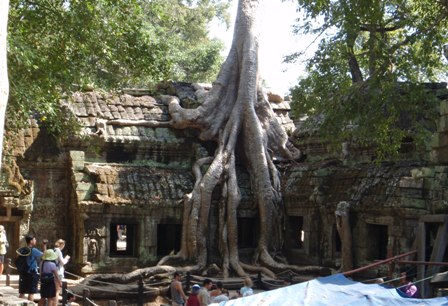 遺跡と巨木2