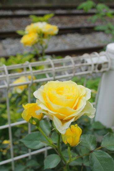 photo259.jpg