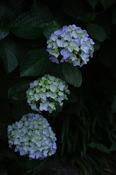 photo269.jpg