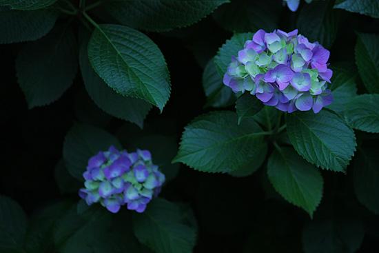 photo270.jpg